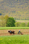 Levi Stoltzfus Farm in Spring. Plowing with four team Belgian horses.