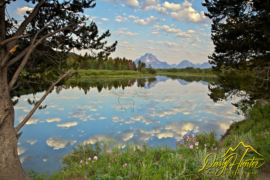 """Wild rose, Mt. Moran, reflection, Oxbow Bend, Snake River, Grand Teton National Park<br /> <br /> For production prints or stock photos click the Purchase Print/License Photo Button in upper Right; for Fine Art """"Custom Prints"""" contact Daryl - 208-709-3250 or dh@greater-yellowstone.com"""