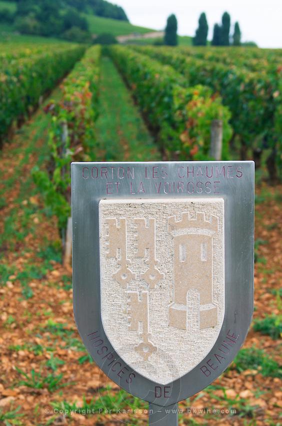 Vineyard. Corton les Chaumes et la Voirosse, Hospices de Beaune. Aloxe Corton, Cote de Beaune, d'Or, Burgundy, France