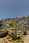Israel, Sharon region. Shatil park and nursery