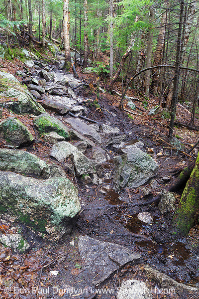 A wet area along the Mt. Tecumseh Trail in Waterville Valley, New Hampshire during the spring of 2017 that is in desperate need of drainage work. Over the last six years, there has been an excessive amount of stonework done on this trail, but this high priority area has been ignored. Trail maintenance organizations say high priority areas of a trail are first and foremost.