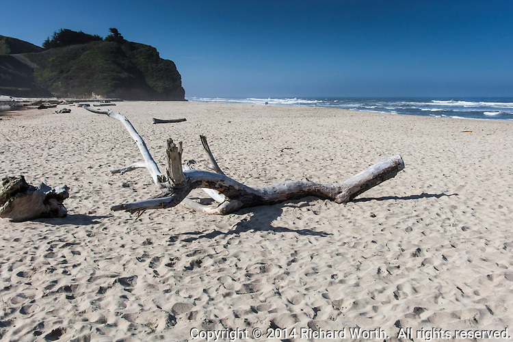 Long after high tide has receded, large pieces of driftwood detritus lie on the beach, far from the waves of low tide.