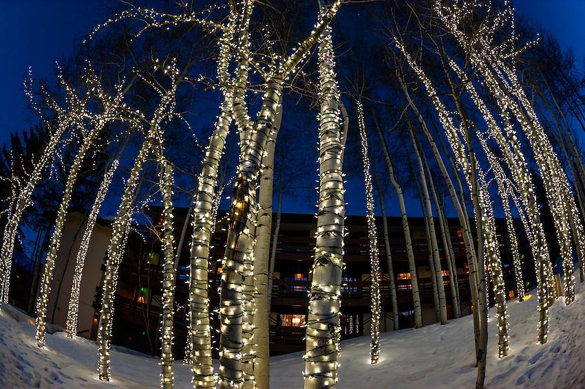 Illuminated aspen trees at Wildwood Lodge, Snowmass Village, Colorado USA.
