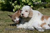 Bob, ANIMALS, REALISTISCHE TIERE, ANIMALES REALISTICOS, dogs, photos+++++,GBLA4355,#a#, EVERYDAY