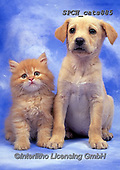 Xavier, ANIMALS, REALISTISCHE TIERE, ANIMALES REALISTICOS, cats, photos+++++,SPCHCATS885,#a#, EVERYDAY