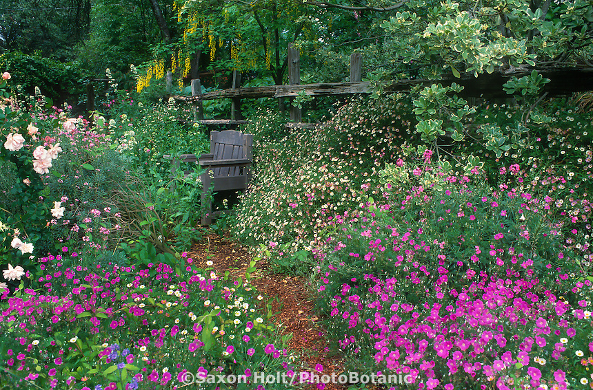 Geranium incanum and Erigeron karvinskianus flowering perennial groundcovers by mulched path leading to bench in California country garden, Michael Bates
