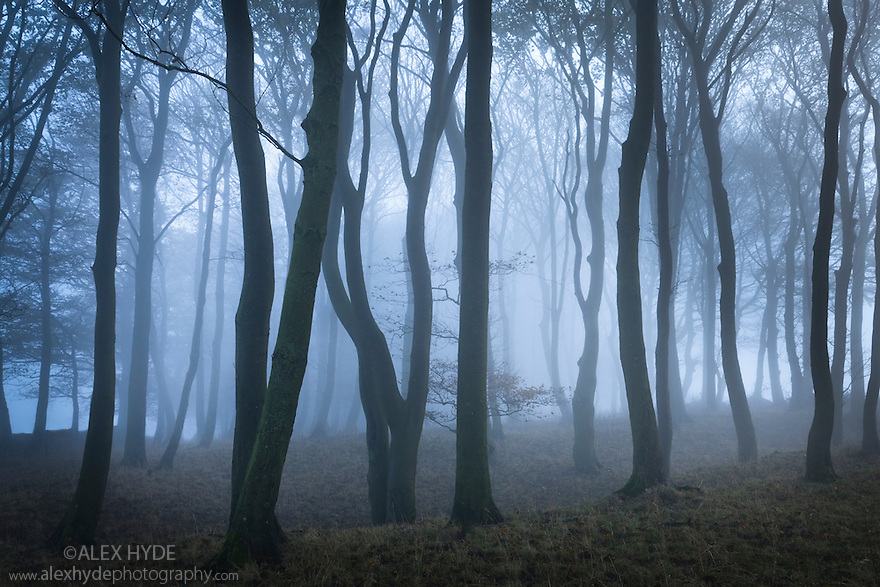 Beech woodland in dense fog. Peak District National Park, Derbyshire, UK. October.