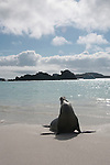 On the beach of garner bay there are many sea lions. beautiful to observe them
