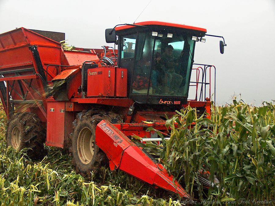 Corn picker harvesting corn in Elma, Washington, USA.