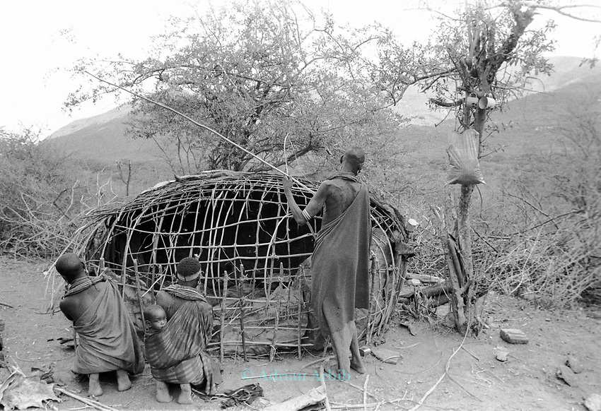 Samburu women building a traditional  hut.  <br /> Maralal, Samburu District.  <br /> Northern Kenya.