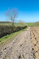 Field margin in spring - Suffolk, April