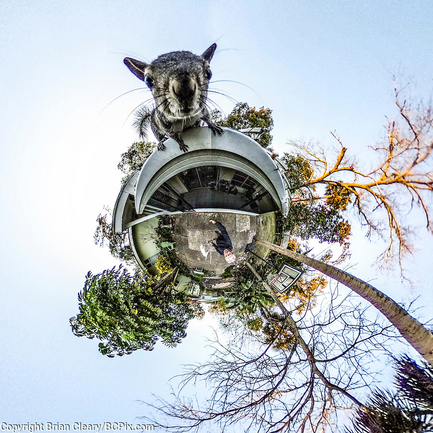 Squirrel, on top of the world, little planet 360 degree view.  (Photo by Brian Cleary/ www.bcpix.com )