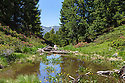Mountain pool, home of the Alpine Newt (Ichthyosaura / Triturus alpestris). Nordtirol, Austrian Alps. July.