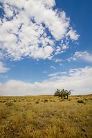 Trees are few and far between in the Cimarron Naitonal Grassland near Elkhart Kansas.
