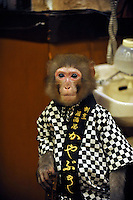 Fuku-chan, 6, a Japanese monkey waiter, at an Izakaya bar in north of Tokyo, Japan. The six year old monkey looks after the guests hot towels by taking them from the steamer oven and delivering them to all guests. The bar is extremely popular amongst people from all over Japan who come to see the monkey waiters.