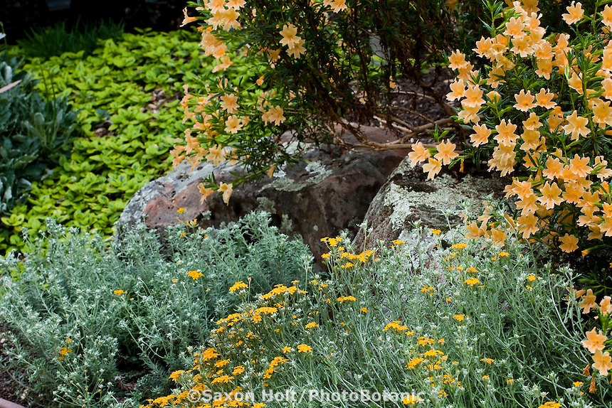 Rocks As Design Element In Drought Tolerant Perennial Border In California Native  Plant Garden