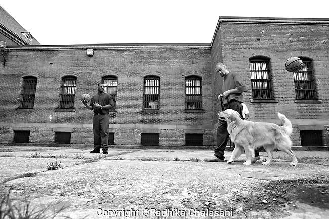 BEACON, NEW YORK:  Andy (R) walks Rezzie around the courtyard to teach him not to respond to distractions as balls are thrown around during a training class for the Puppies Behind Bars program at Fishkill Correctional Facility. The  program prepares puppies to be service dogs and consists of one day of class a week on topics such as obedience training, grooming, basic care of the dogs. The dogs spend 18-20 months in the program working with the prisoners.