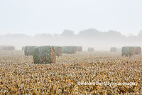 63801-07618 Hay bales in field on foggy morning, Marion Co. IL