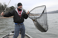 NWA Democrat-Gazette/FLIP PUTTHOFF <br /> Brad Wiegmann of Nob Hill catches a striped bass in 2017 at Beaver Lake. Gulls feeding on shad indicate stripers and other species may be feeding below.