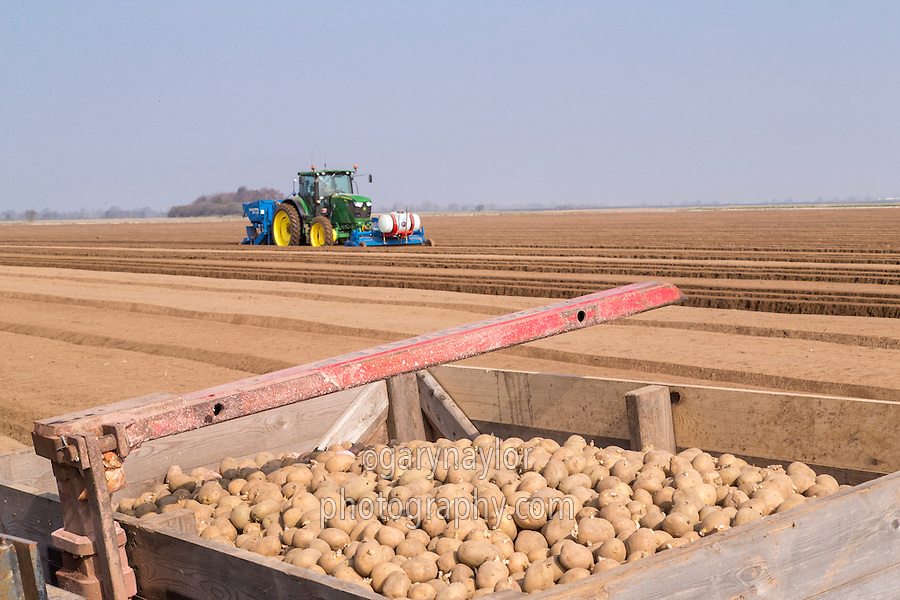 Planting potatoes with a Standen SP330 (three row planter) - Lincolnshire, March