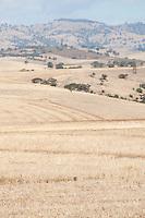 Dry hills in summer,near Adelaide, South Australia.