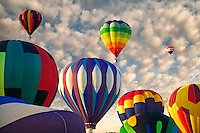 Balloons at Northwest Art and Air Festival. Albany, Oregon
