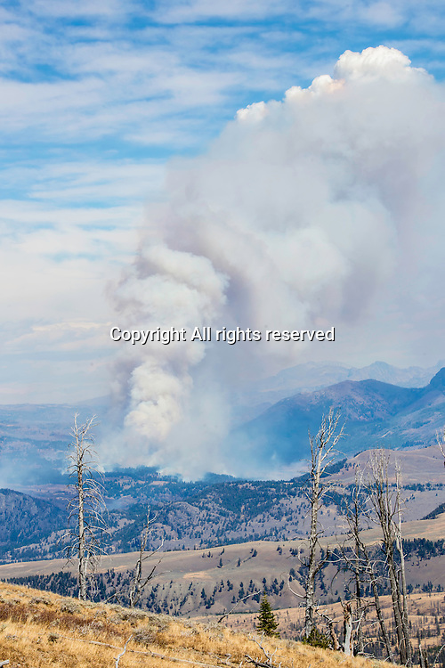 There were several wildfires in Yellowstone National Park in 2016.