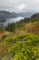 Temperate rainforest, Knight Island, Prince William Sound, Chugach National Forest, southcentral, Alaska.