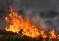 Fire fighters tackle a grass fire on Fairwood Common, in the outskirts of Swansea, Wales, UK. The fire has taken hold near to the training ground of championship football side, Swansea City FC, and has effected around eight hectares of land. Tuesday 20 November 2018