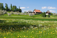 CHE, Schweiz, Kanton Thurgau, bei Steckborn, Bauernhof, Blumenwiese und Apfelbluete | CHE, Switzerland, Canton Thurgau, near Steckborn, farmhouse, flower meadow and apple blossom