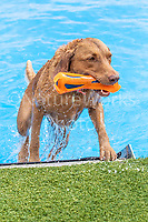 K9 Splash Zone NADD Dog Days of Summer