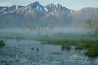 Summer Landscape of Palmer Hayflats Refuge with Canadian Geese and Twin Peaks of Chugach Mountain Range  Southcentral, Alaska<br /> <br /> (C) Jeff Schultz/SchultzPhoto.com