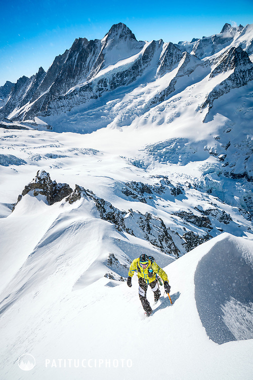 Climbing the Wetterhorn's normal route, the south face, during a ski mountaineering tour of the Wetterhorn, Mittelhorn and Rosenhorn, in the Bernese Oberland, Switzerland