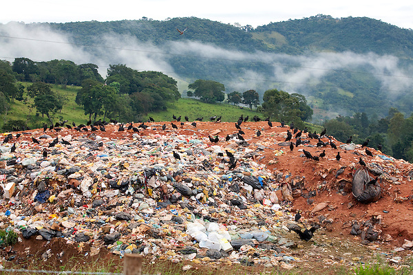 Extrema_MG, Brasil...Urubu-de-cabeca-preta (Coragyps atratus) em um lixao proximo a BR 381...Vultures in the landfill next BR 381...Foto: LEO DRUMOND / NITRO....