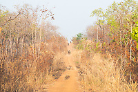 Military policeman and rangers ride out in the early morning on a patrol looking for illegal loggers, in the Phnom Tnout Phnom Pok Wildlife Sanctuary, in northern Cambodia.
