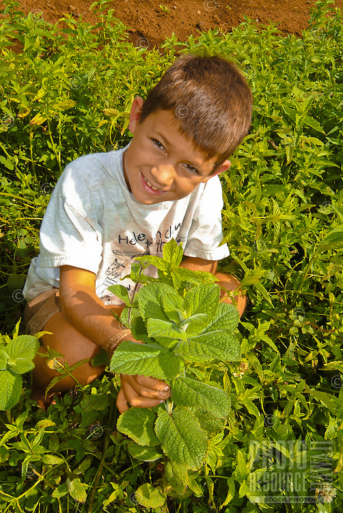 Young boy in an herb garden, Upcountry Maui