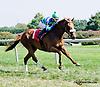 Chiffonade winning at Delaware Park on 9/4/14