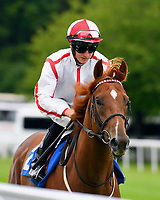 Sword Beach ridden by Tom Marquand goes down to the start  of The First Carlton Novice Auction Stakes Div 2 during Evening Racing at Salisbury Racecourse on 11th June 2019