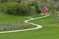 Iowa County, Wisconsin:<br /> Curving gravel road leads to the Cates barn (1893), early spring