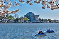 Jefferson Monument, Spring, Cherry Blossoms, Tidal Basin, Washington, DC