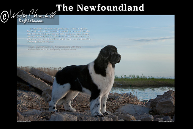 Newfoundland<br /> <br /> <br />  Shopping cart has 3 Tabs:<br /> <br /> 1) Rights-Managed downloads for Commercial Use<br /> <br /> 2) Print sizes from wallet to 20x30<br /> <br /> 3) Merchandise items like T-shirts and refrigerator magnets