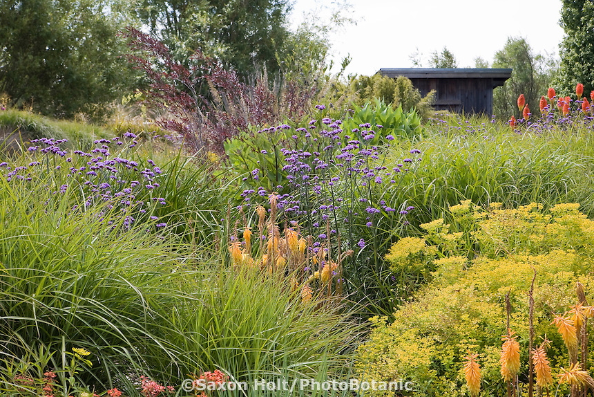 Holt 904 193 photobotanic stock photography garden library for Long grass in garden