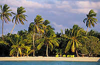 Iles Bahamas /Ile d'Andros/South Andros: la plage et les palmiers de l'Eco-Lodge-Tiamo Resort