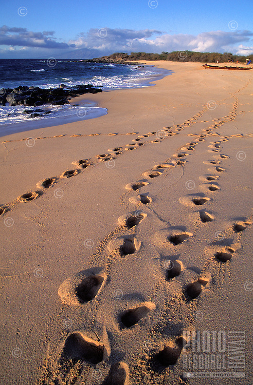 Rows of footprints line a beach on th ecoast of Kahoolawe.