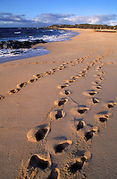 Rows of footprints line a beach on th ecoast of Kahoolawe.