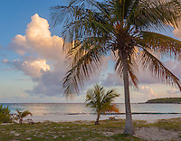 Vieques, Puerto Rico: Sunset clouds illumiates a palm, clouds and waters of Red Beach (Playa Caracas)