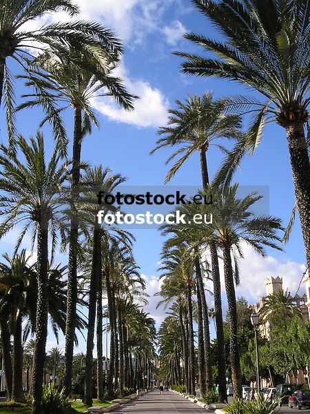 Paseo Sagrera with palm trees<br /> <br /> Paseo Sagrera con palmeras<br /> <br /> Paseo Sagrera mit Palmen<br /> <br /> 2272 x 1704 px