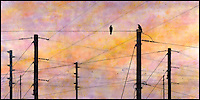 "Mixed media art combination of watercolor encaustic painting and photography of birds on telephone poles ""talking""."