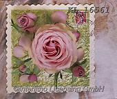 Interlitho-Alberto, FLOWERS, BLUMEN, FLORES, photos+++++,rose,KL16561,#f#, EVERYDAY ,napkins
