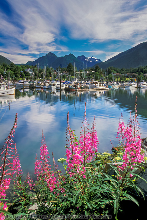 Coastal town of Sitka, fireweed, Crescent harbor, Alaska